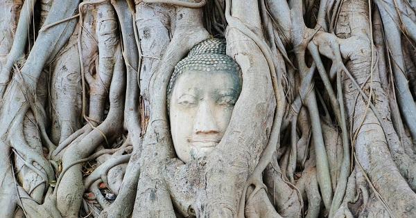 寺院ワット・プラ・マハタートの菩提樹